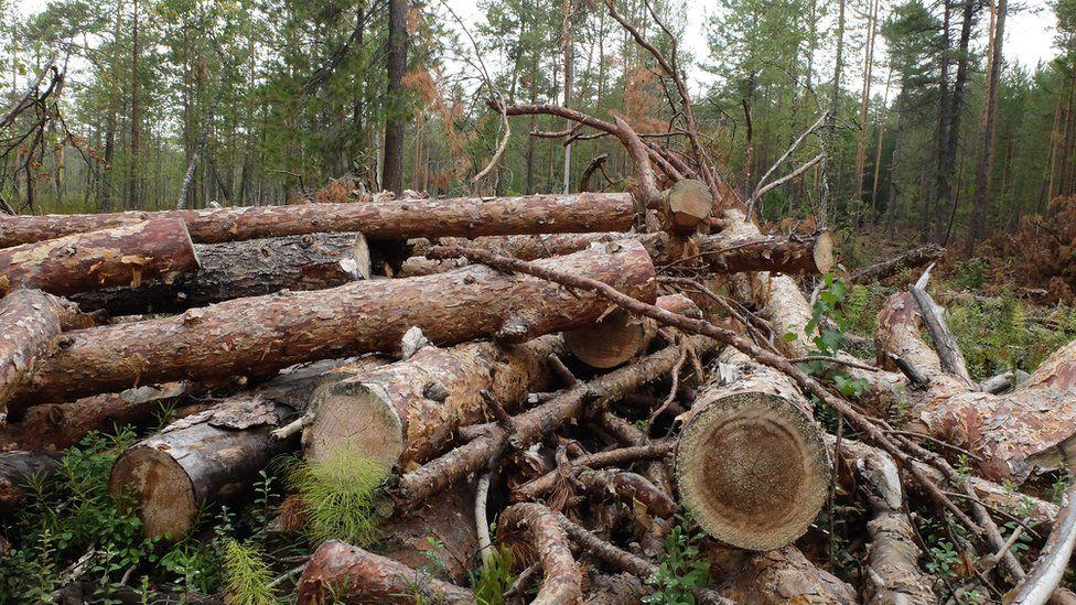 В Україні припинили вирубку лісів за крок до екологічної катастрофи: деталі