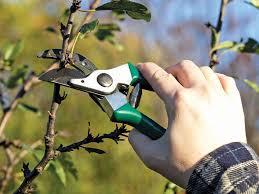 Обрізка дерев. 5 правил, які потрібно знати садівнику