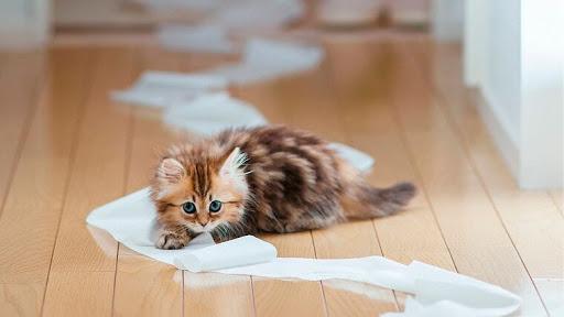 Як позбутися запаху котячої сечі. Практичні поради