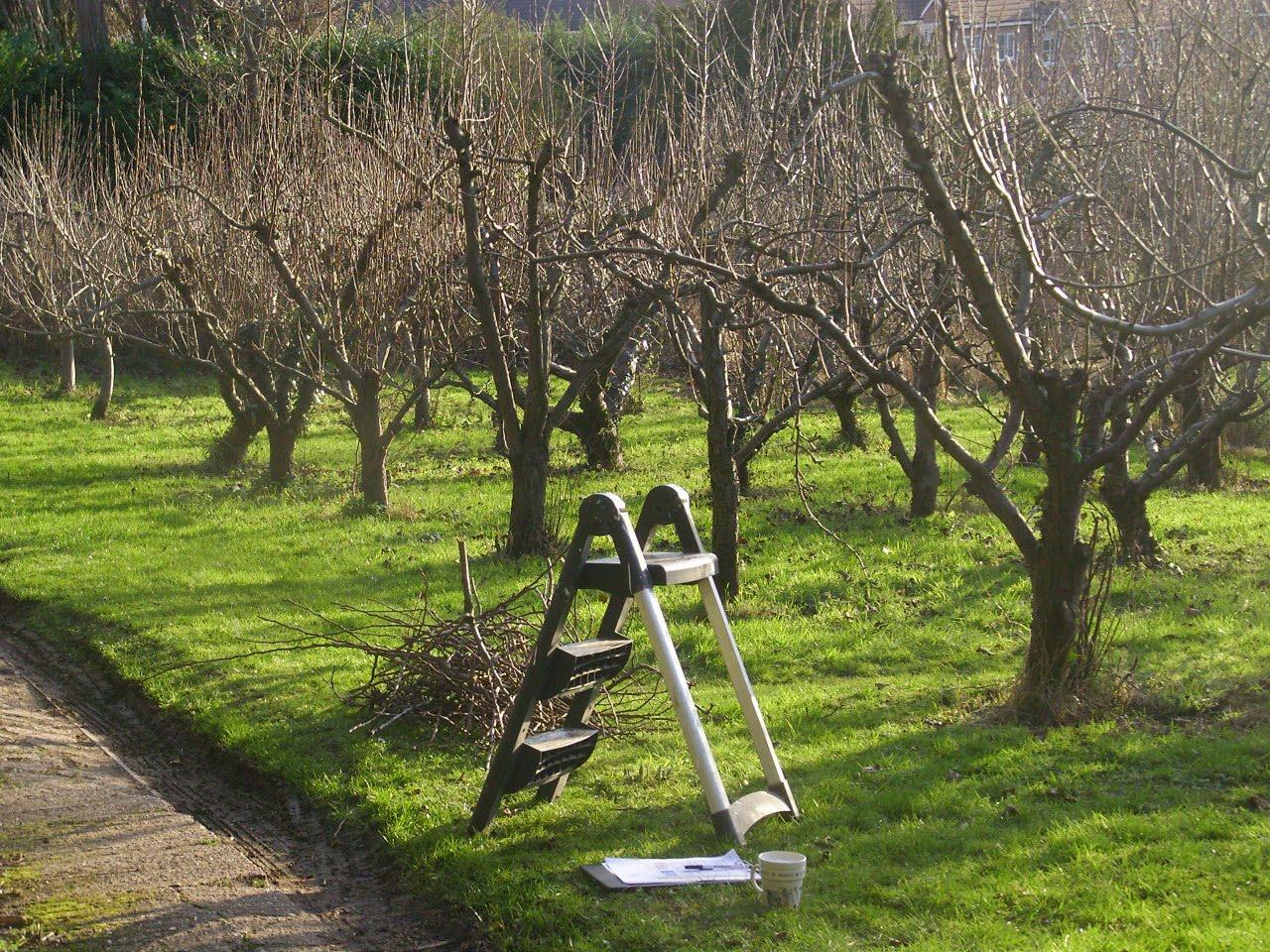 Які роботи необхідно провести у саду навесні